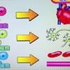 脳梗塞から劇的回復?最新幹細胞治療【NHKあさイチ 3月4日】
